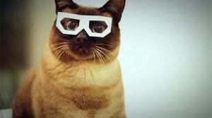 Skifcha-Dubstep-Cat-Video-610