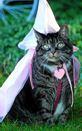 cat costume