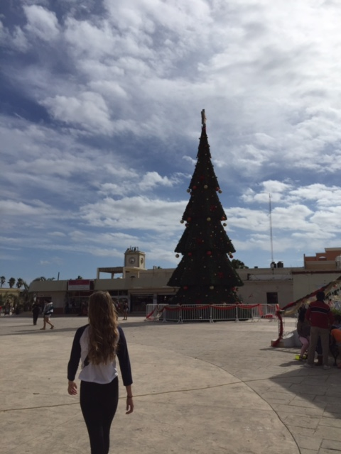 The giant Christmas tree in the center of the plaza.