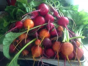 beets, garden, gardening, vegetable