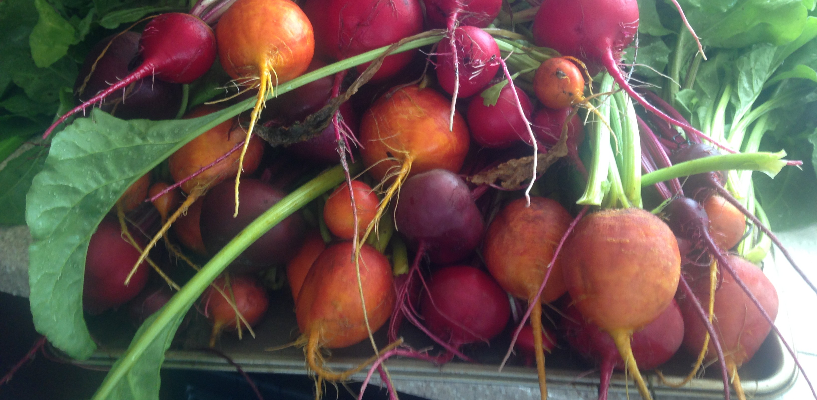 beets, garden, gardening, vegetable