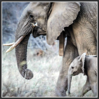 See an end to the illegal ivory trade