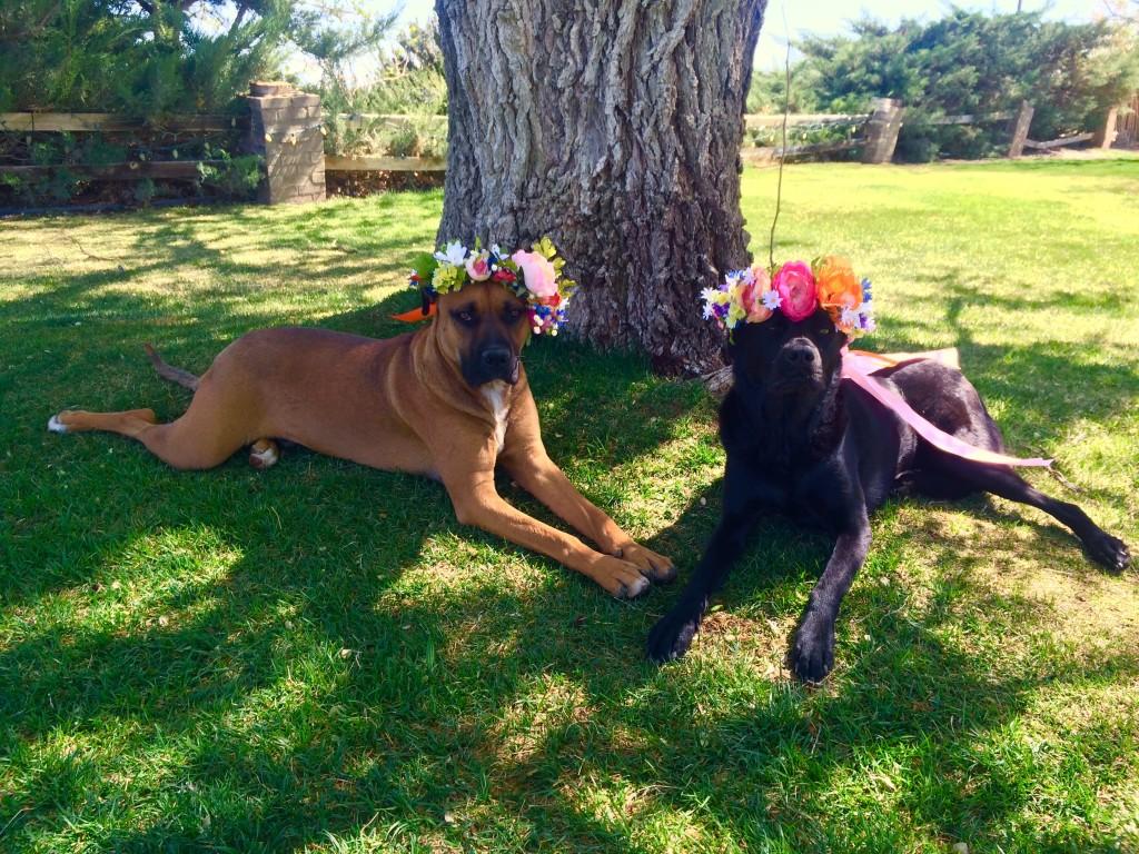 pups in flower crowns